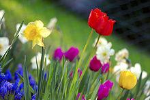 220px-Colorful_spring_garden[1]